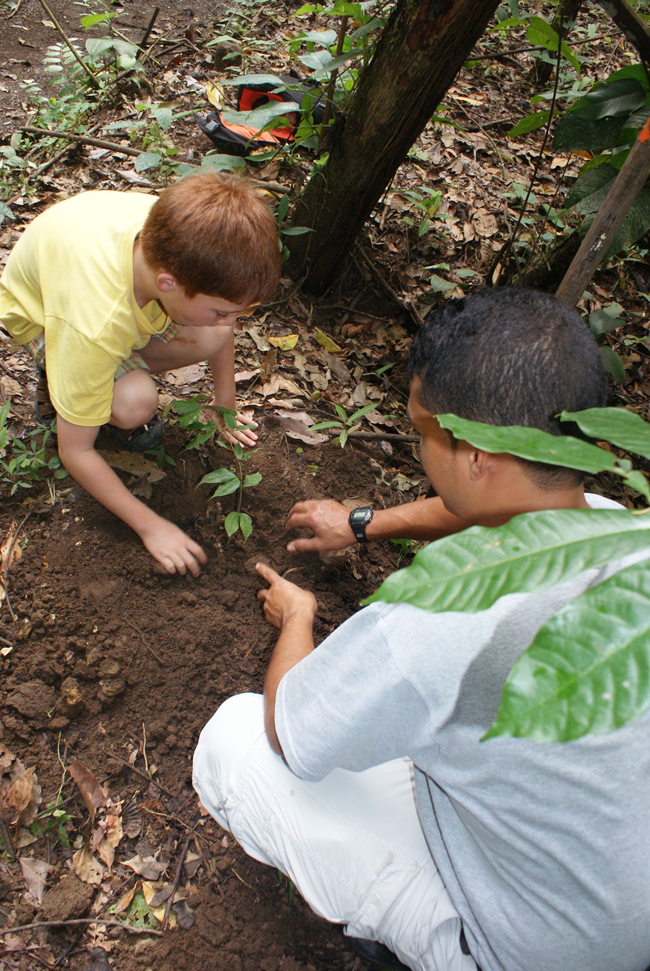 tree planting in costa rica
